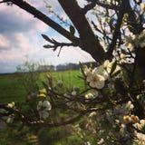 春天的图片 免版税库存照片
