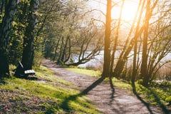 春天的城市公园 步行道路和一家银行在池塘附近 来通过树枝的太阳光芒 免版税库存图片