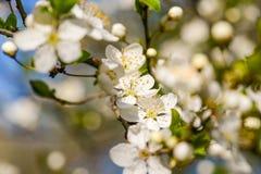 春天的开花花 免版税库存照片