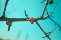 春天的明亮的颜色 库存图片
