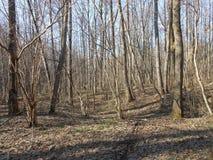 春天的森林 免版税库存图片
