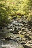 春天的河 库存图片