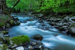 春天的河Bijela 库存照片
