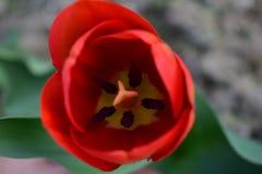 春天的第一个标志 E 库存图片