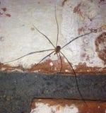 春天的第一只蜘蛛 免版税库存图片