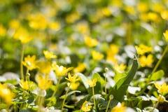 春天的领域开花背景 免版税图库摄影