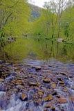 春天的绿叶沿一条安静的河的。 免版税图库摄影