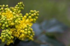 春天的黄色花 库存照片