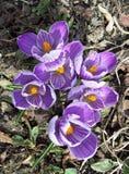 春天突然出现 免版税库存照片