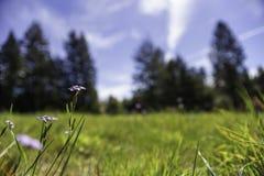 春天第一朵花在领域的 免版税库存照片