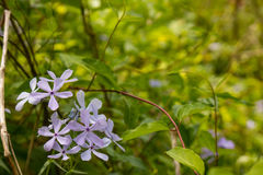 春天第一朵野花  免版税库存图片
