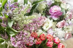 春天紫罗兰色淡紫色花,抽象软的花卉背景 免版税库存照片