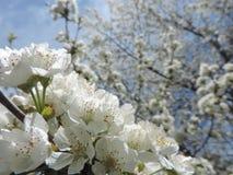 春天纯净 库存图片