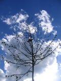春天结构树年轻人 免版税库存图片
