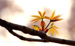 春天结构树枝杈 免版税库存图片