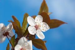 春天结构树花 免版税库存照片