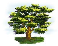 春天结构树 免版税库存照片