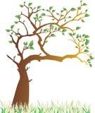 春天结构树 免版税库存图片