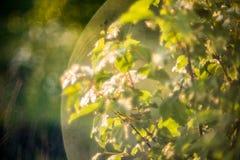 春天绽放和透镜火光 库存照片