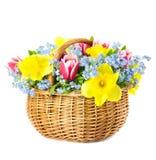 春天美丽的花束开花到在空白backgr的篮子 免版税库存照片