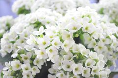春天美丽的花  库存照片