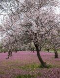 春天美好和五颜六色的风景 免版税库存照片