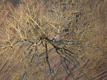 春天耕地 领域和一棵偏僻的树 在视图之上 天线,寄生虫 免版税图库摄影