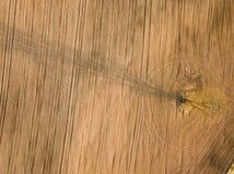 春天耕地 领域和一棵偏僻的树 在视图之上 天线,寄生虫 免版税库存照片