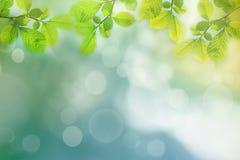 春天背景,绿色树在被弄脏的背景离开 免版税库存照片