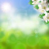 春天背景 库存图片