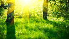 春天自然场面 美好的横向 有绿草的公园 免版税图库摄影