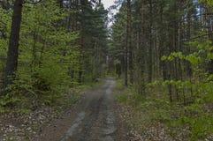 春天自然美好的风景与混合森林、土路和绿色沼地的 免版税图库摄影