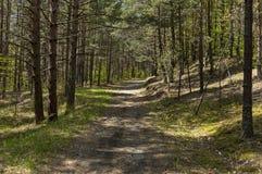 春天自然美好的风景与混合森林、土路和绿色沼地的 库存图片