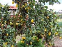 春天自然风景在Ponte的郊区de利马镇在葡萄牙 免版税库存照片