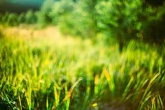 春天自然绿草自然被弄脏的Absract背景 Bo 免版税库存照片