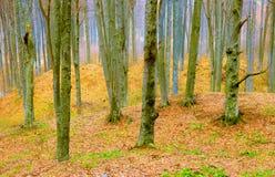 春天色的林木树干 免版税库存图片