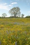 春天花五颜六色的花束和花菱草临近湖休斯,加州 免版税图库摄影