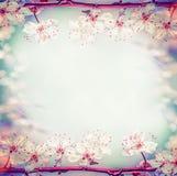 春天花卉框架用俏丽的樱桃或佐仓开花,在bokeh 免版税库存图片