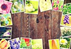 春天花卉框架 免版税库存图片