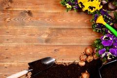春天花和园艺工具在木桌上 库存图片