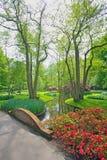 春天花和开花在Keukenhof荷兰 库存图片