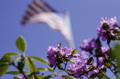 春天花和美国国旗 免版税图库摄影