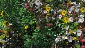 春天花和草特写镜头 库存图片