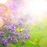 春天花和蝴蝶;抽象春天背景; 免版税图库摄影