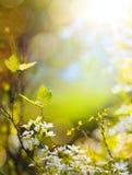 春天花和飞行蝴蝶;抽象晴朗的美好的复活节 免版税库存照片
