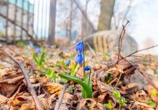 春天花在公园区域 免版税库存照片