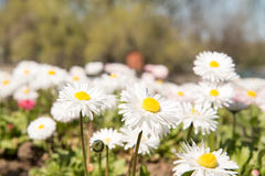 春天花在公园 免版税库存照片