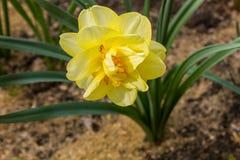 春天花在公园 免版税库存图片