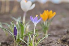 春天花在庭院里开了花 库存图片