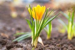 春天花在庭院里开了花 免版税库存照片